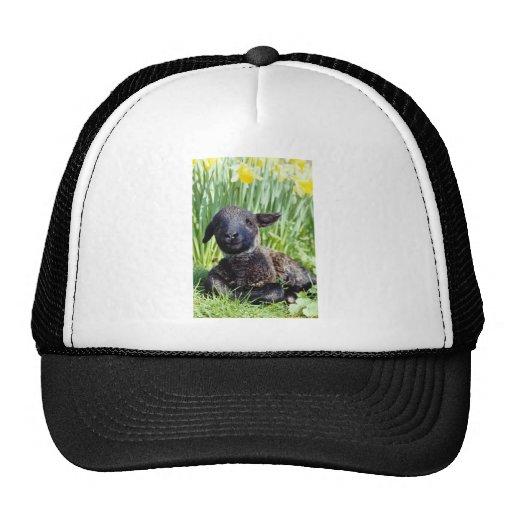 yellow Lamb in springtime, England flowers Trucker Hat