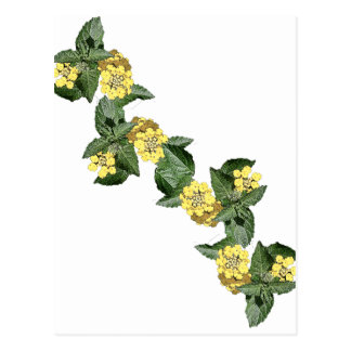 Yellow Lantana Postcard
