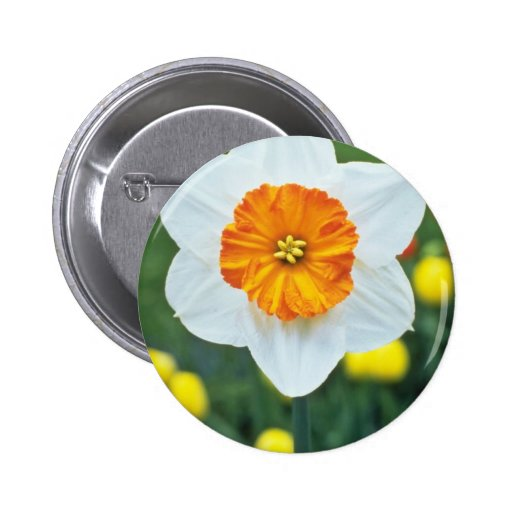 Yellow Large-cupped Narcissi, 'Professor Einstein' Pinback Button