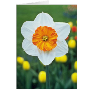 Yellow Large-cupped Narcissi, 'Professor Einstein' Greeting Card