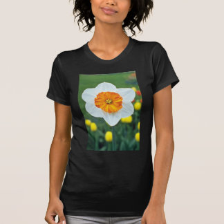Yellow Large-cupped Narcissi, 'Professor Einstein' T-shirts