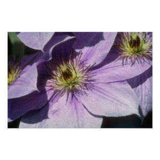 Yellow Lavender shadows flowers Posters