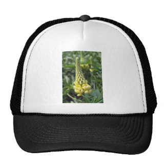 yellow Le Chandelier Lupin, (Lupinus) flowers Mesh Hat