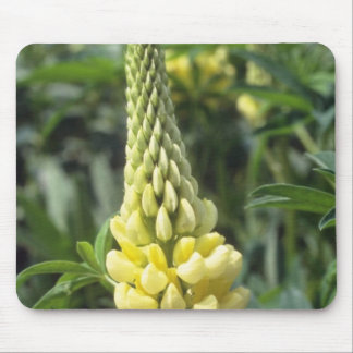 yellow Le Chandelier Lupin, (Lupinus) flowers Mouse Pad