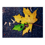 Yellow leaf post card