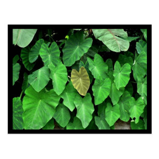 Yellow Leaf Postcard