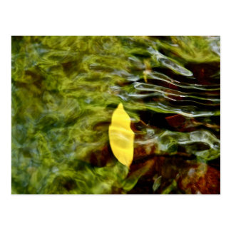 YELLOW LEAF UNDER RIPPLES IN CLEAR WATER POSTCARD
