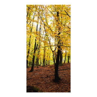 Yellow leaves forest custom photo card
