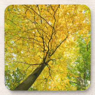 Yellow leaves of treetop with trunk in fall coaster