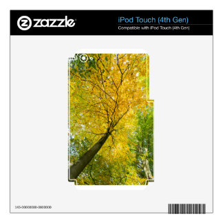 Yellow leaves of treetop with trunk in fall decals for iPod touch 4G