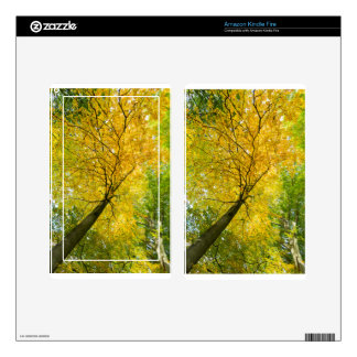 Yellow leaves of treetop with trunk in fall decals for kindle fire