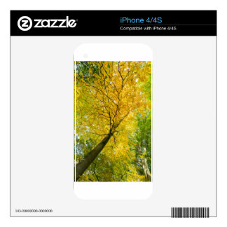 Yellow leaves of treetop with trunk in fall decals for the iPhone 4S