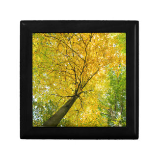 Yellow leaves of treetop with trunk in fall gift box