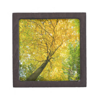 Yellow leaves of treetop with trunk in fall keepsake box