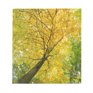 Yellow leaves of treetop with trunk in fall notepad