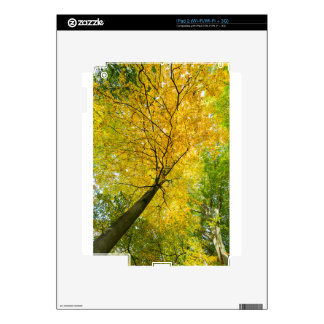 Yellow leaves of treetop with trunk in fall skins for iPad 2