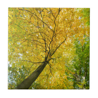 Yellow leaves of treetop with trunk in fall tile