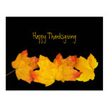 Yellow Leaves on Black Thanksgiving Postcards