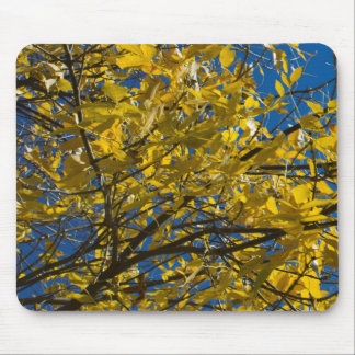 Yellow Leaves on Fall Tree Mouse Pad