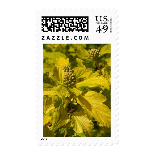 Yellow Leaves Postage