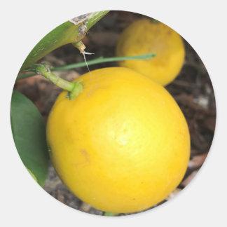 Yellow Lemons Classic Round Sticker