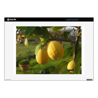 Yellow lemons growing on the tree at sunset laptop decal