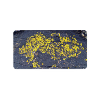 Yellow Lichens on a black rock Address Label