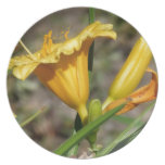 Yellow Lillies Plates