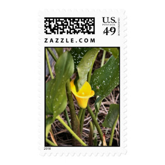 Yellow Lilly 5 25 2009 Postage Stamp