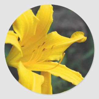 Yellow Lilly Stickers
