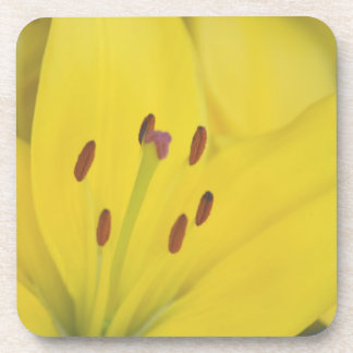 Yellow Lily Beverage Coaster