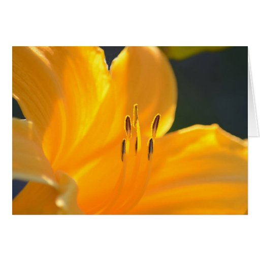 Yellow Lily Blank Greeting Card