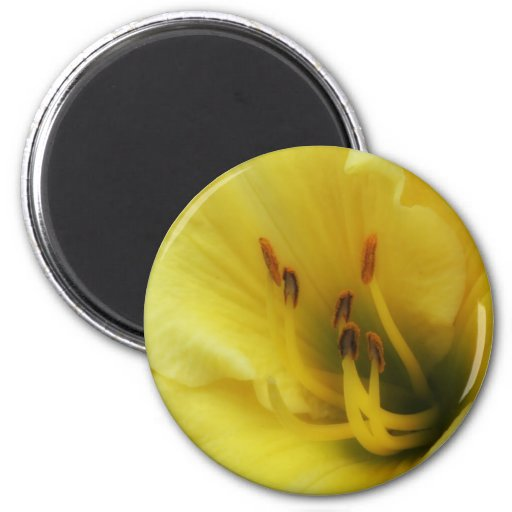 Yellow Lily Close Up Magnet