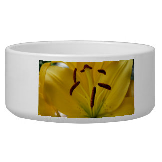 Yellow Lily Curved Petals Bowl
