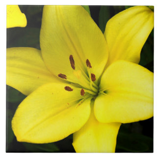 Yellow lily flower blossom tile
