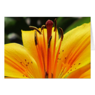 Yellow Lily Flower Card