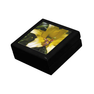 Yellow Lily Gift Boxes