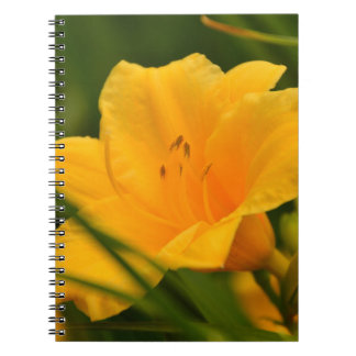 Yellow Lily in Bloom Spiral Note Books