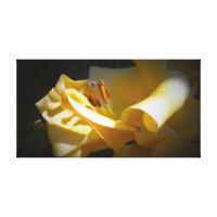 Yellow Lily Macro Canvas Print