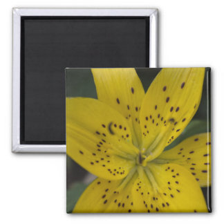Yellow lily refrigerator magnet