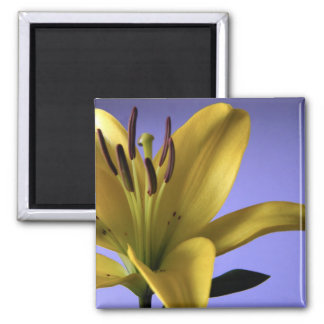 Yellow Lily on Blue Background Magnet