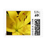 Yellow Lily Postage Stamp