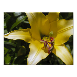 Yellow Lily Print