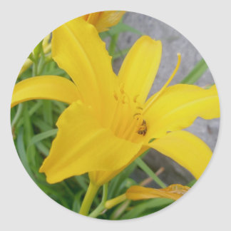 Yellow Lily Stickers Round Sticker