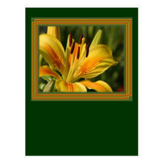 Yellow Lily With Decorative Border Postcard