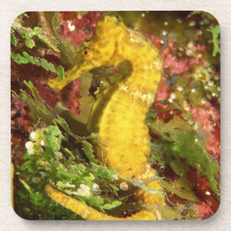 Yellow longsnout seahorse beverage coasters