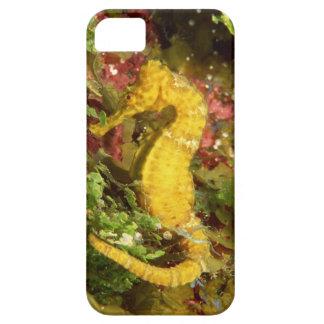 Yellow longsnout seahorse iPhone SE/5/5s case