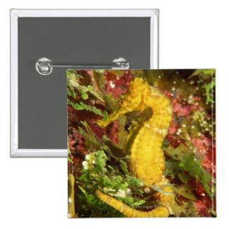 Yellow longsnout seahorse pinback button