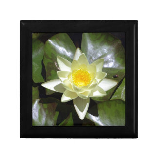 Yellow Lotus and lily pads Gift Box