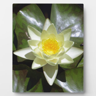 Yellow Lotus and lily pads Plaque